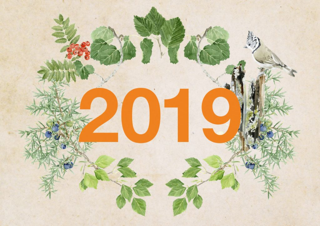 The cover of 2019 Stora Enso Metsä calendar.